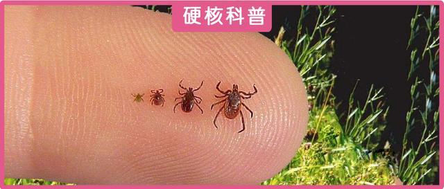 多人中招!这种虫子叮咬后可致143种疾病甚至死亡
