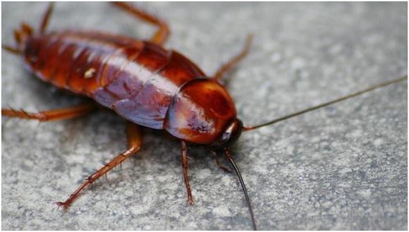 怎么消灭家里的蟑螂?-第4张图片-IT新视野