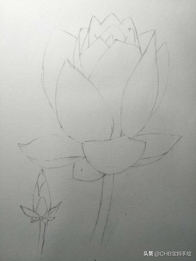 超级简单彩铅画花——简单到你只要动手就能画出来的荷花图