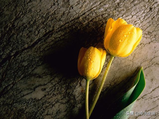 100种鲜花的花语及朵数,把你最爱的花送给最爱的人