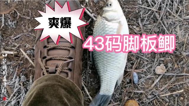 野钓鲫鱼鱼获图片