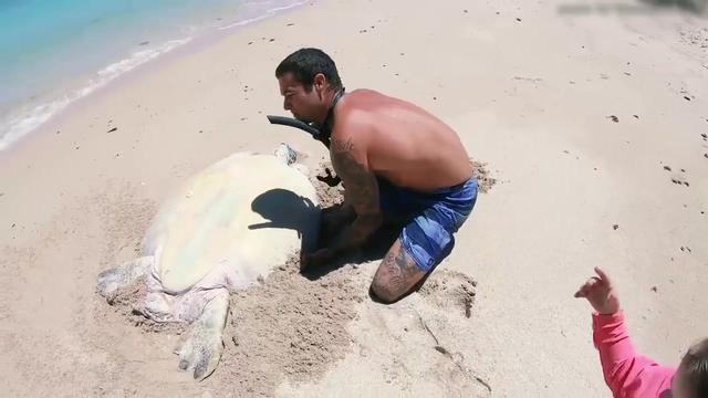 大海龟图片_海洋生物_高清图片下载_三联