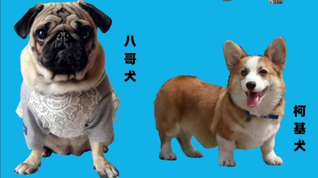 小型宠物狗图片和名字