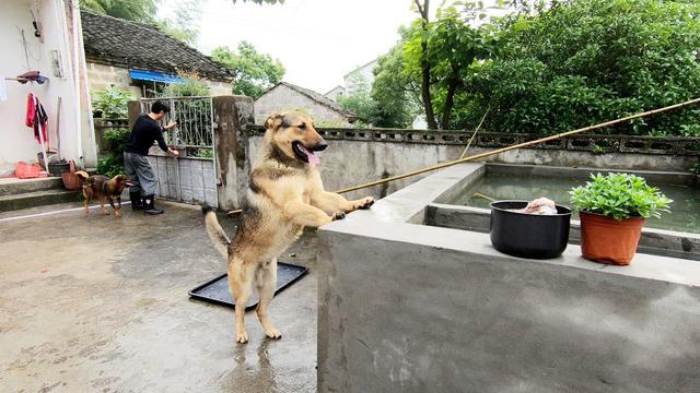 免费领养宠物交易平台