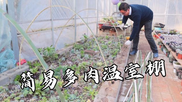 寒流再次来袭为,多肉取暖几根竹子搭建小型简易温室棚