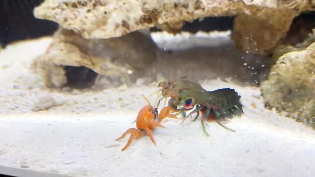红螃蟹吃什么?_360问答