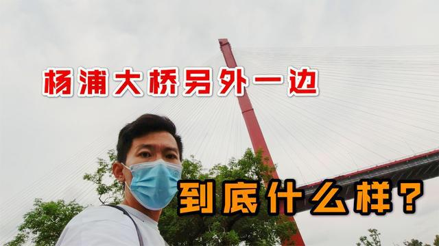 杨浦大桥限行照片