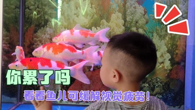 金锦鲤鱼图片