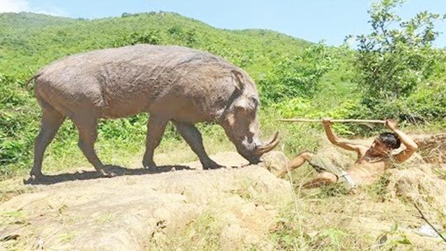 野猪陷阱制作图解大全-「动物诱捕器」-马可波罗网