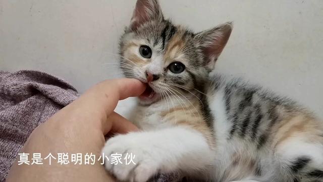 为啥我家猫喜欢边抱着手咬'边用腿踹我? - 小组讨论 - 豆瓣