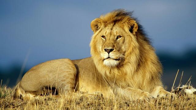 自然传奇雄狮四兄弟