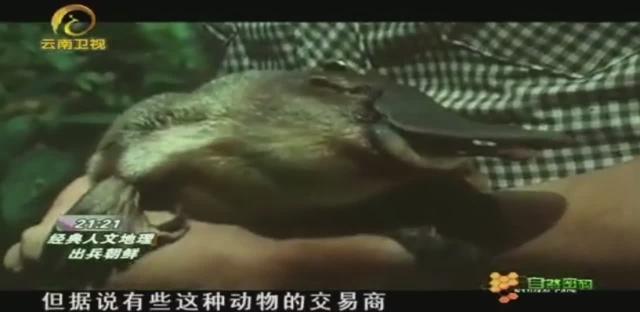 澳大利亚鸭嘴兽镍币20分图片鉴赏_爱藏网