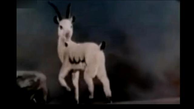 附近哪里有卖波尔山羊的