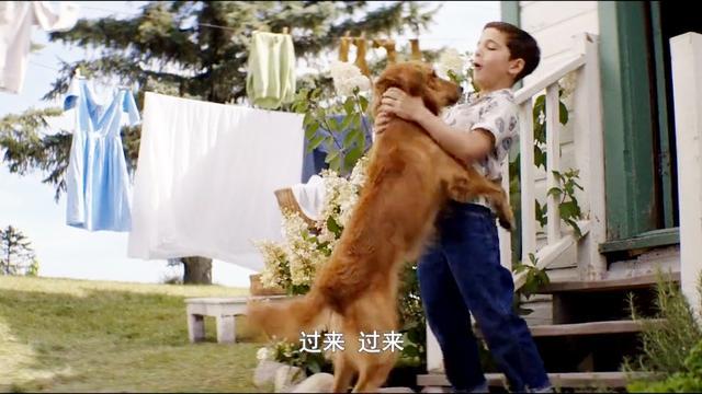 狗狗和小主人一起玩接球游戏,狗狗永远是人类最亲的朋友!