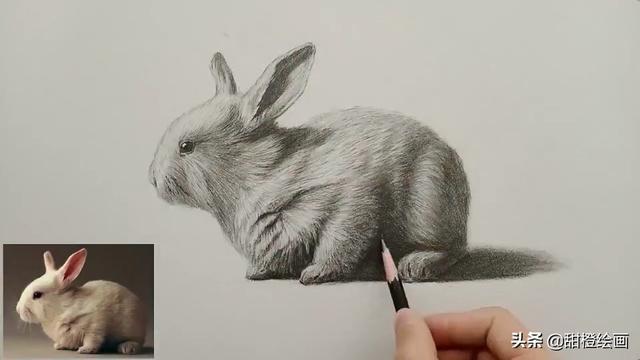 素描小兔子的画法步骤,黑白灰的对比,是表现物体空间感的基础。