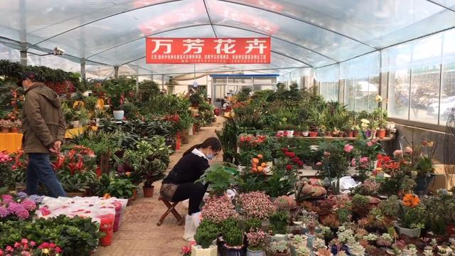 最新花卉批发市场价格、批发报价、价格大全 - 阿里巴巴