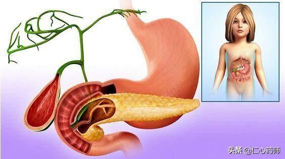 胆囊疼痛位置图大全