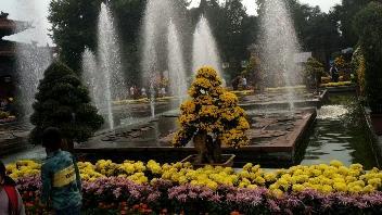洛阳:王城公园菊展