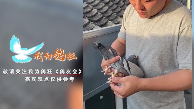 四川春林戈马利种鸽