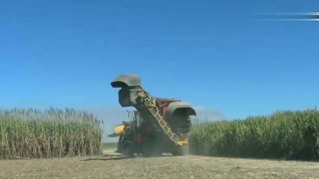 澳大利亚甘蔗收割机的作业过程,看完后,你不得不服!