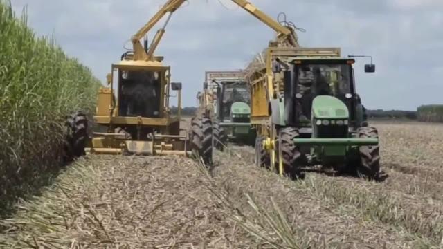 澳大利亚甘蔗收割机的作业过程,看完后,你不得不服!_网易视频