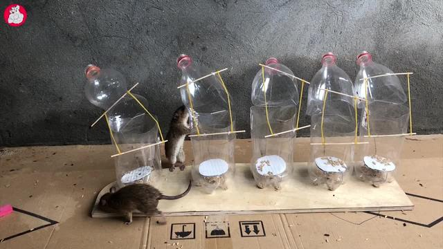 巧用矿泉水瓶捉老鼠,保证老鼠有去无回啊!_网易视频