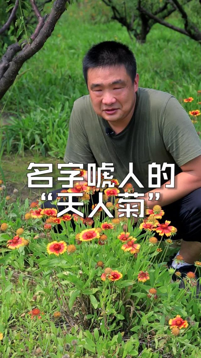 南方常见花卉