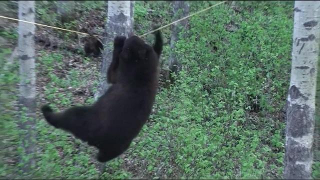 大黑熊表情包