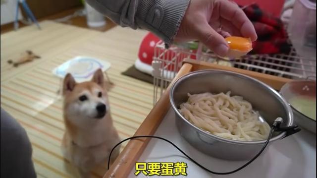 柴犬小春又来了,好可爱的狗狗_北京时间