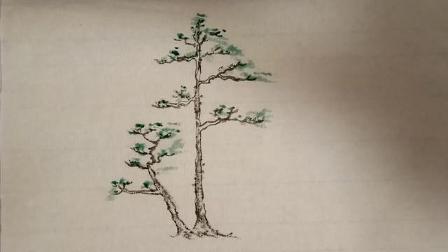 一本三杆的黄杨素材  杆部弯曲  自然收枝 做盆景的好树桩