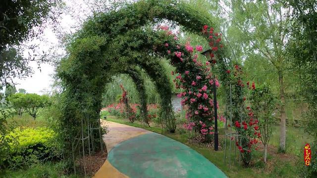 安徽阜阳生态园图片
