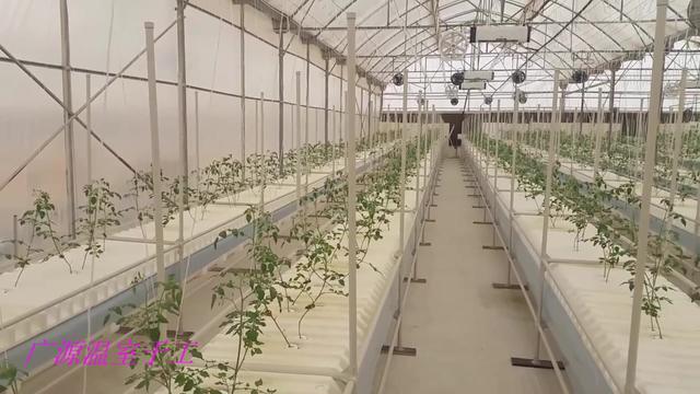 标准智能化薄膜连栋温室蔬菜大棚150元一个平方米,规模化种植