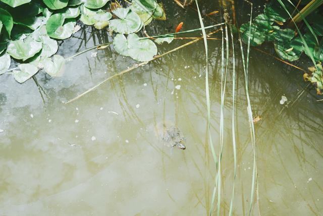 明泽湖案件