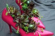 还在为找花盆犯愁?一双鞋子就是最美的花盆!