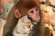 动物界中跨种族的恋爱,比人类看着自然多了