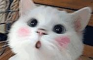 热点|8.8 国际爱猫日:春风十里,不如爱猫的你!