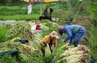 什么是新型职业农民?