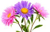心理测试:你最喜欢哪束花,测出你的另一半对你的忠诚度
