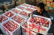 新发地市场苹果价格