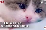 我国首只克隆猫诞生|你能接受克隆自己的爱宠吗?