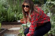 美国第一夫人在菜园劳作照片引质疑:这是摆拍!