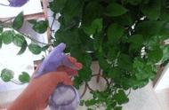 听说叶必绿肥料可以改良酸性土壤是真的吗