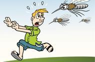 为什么夏天的蚊子会那么多