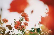 今日秋分,日光夜色两均长,你知道这个季节吃什么防燥吗?