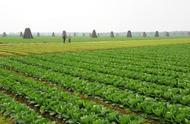 北方农村创业项目
