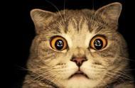 我国首只克隆猫诞生,标志我国克隆技术迈进一大步