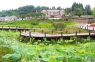简阳:发展都市现代农业 ,谱写乡村振兴新篇章