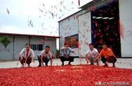 80后农民用1000斤红辣椒摆出国旗图案庆丰收