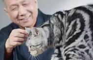 8.8国际爱猫日|喵~爱猫者的专属礼物请查收