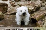 2100年全球均温或升高7摄氏度!@一只小北极熊的自述……